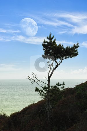 Moon and pine stock photo, Seascape with a pine tree and big Moon over sea. by Ivan Paunovic