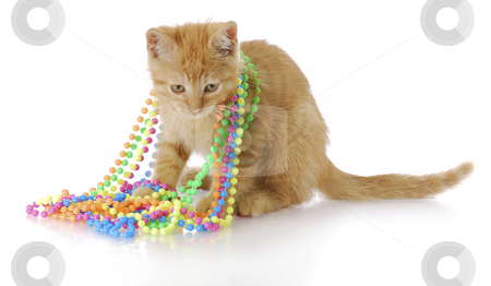 Playful kitten stock photo, Adorable three month old kitten playing with colorful beads with reflection on white background by John McAllister