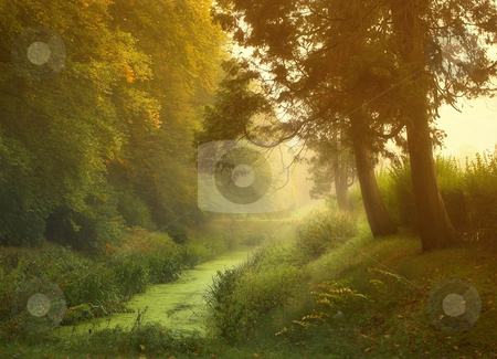 Misty morning stock photo,  by Anneke