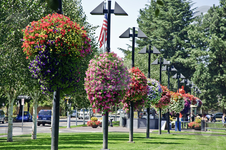 Hanging Flower Baskets on Hanging Flower Baskets In A Park Stock Photo   Download Beaverton