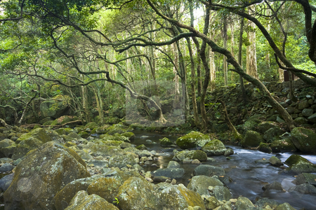 Green forest and river  stock photo, Green forest and river by Keng po Leung