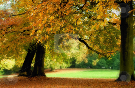 Autumn stock photo, Golden trees in a park in full autumn splendor by Anneke
