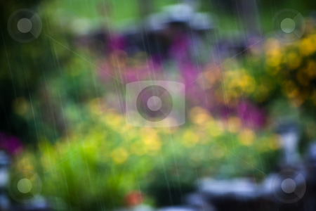 Closeup of rain stock photo, Closeup of rain in front of foliage in Costa Rica by Scott Griessel