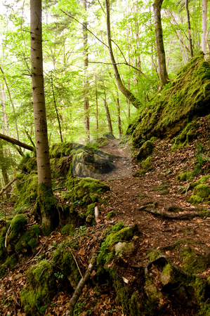 Rocks stock photo, hiking trail in the Black Forest between rocks and roots by Herb Allgaier