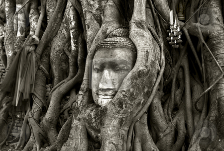 Budda stock photo, Stone budda head traped in the tree roots ayttaya thailand by Charles Taylor