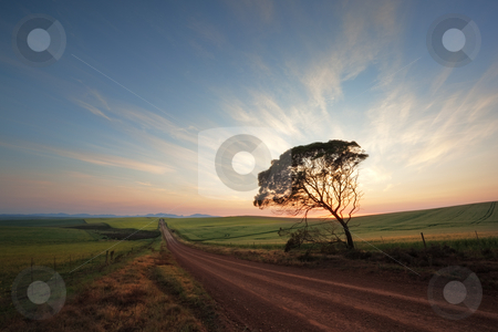 Road on a farm stock photo, Image of a sunrise at a wheat field on a farm in South Africa by Kobus Tollig