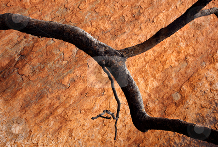 Burnt Orange stock photo, A burnt Gum tree limb contrasts nicely against the sandstone of Ularu, by Mike Dawson