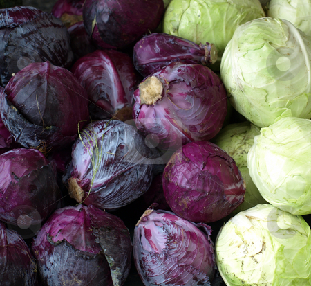 Cabbage  stock photo, Cabbage for sale at the market, both purple and green by Tim Markley