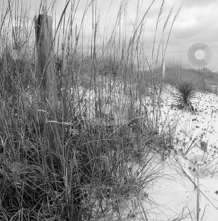 Dunes stock photo, The beaches of North Carolina shown in black and white by Tim Markley