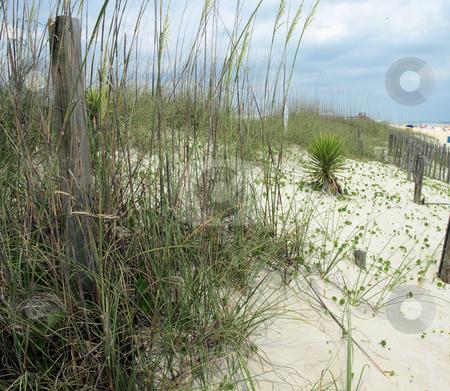 The dunes stock photo, The dunes along the North Carolina Shore by Tim Markley