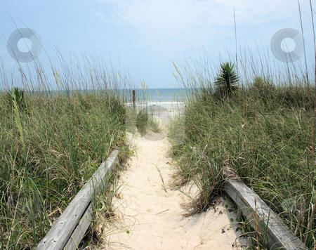 Path to the beach stock photo, A path to the beach along the north carolina shore by Tim Markley