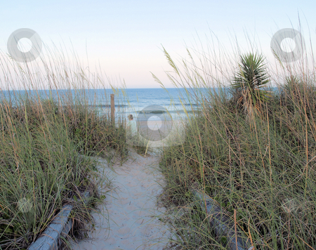 To the beach stock photo, A path through the dunes to the beach in North Carolina by Tim Markley