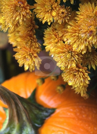 Rainy Fall Day stock photo, Pumpkin and fall flowers on a rainy day in late October. by Jamie Slavy