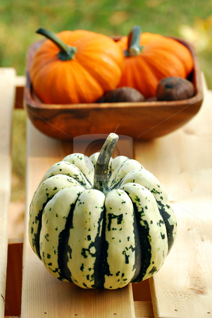 Autumn stock photo, Autumn still life with pumpkins, gourds and chestnuits by HD Connelly