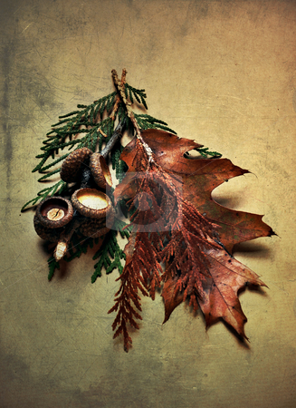 Autumn stock photo, Light-painted still life with leaves and acorns on textured paper by HD Connelly