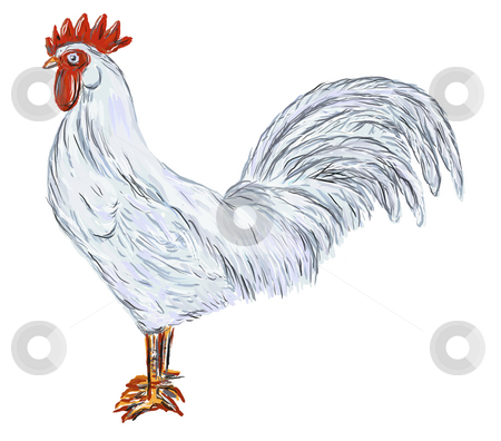 Cock stock photo, Hand painted cock on white background - illustration by J?