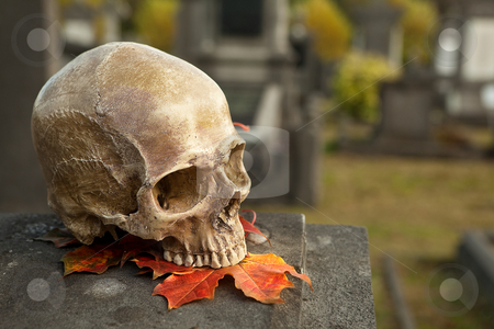 All Saint's skull on a tombstone stock photo, All Saint's scene with a halloween skull in an autumn graveyard by Anneke