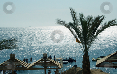 Red sea beach stock photo, Beach in the Red sea, in Egypt by Tatjana Keisa