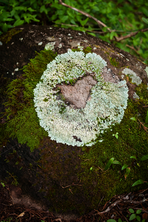 Heart on a rock stock photo, Lichen forming natural heart shape on rack on colud forest by Scott Griessel
