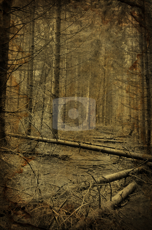 Path into creepy dark fir tree forest  stock photo, Path into creepy dark fir tree forest grunge photo with old paper effect by Fotosutra.com