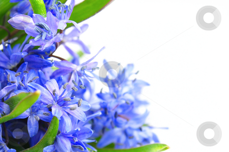 Spring flowers stock photo, Beautiful spring flowers on the white background by Vladimir Gladcov