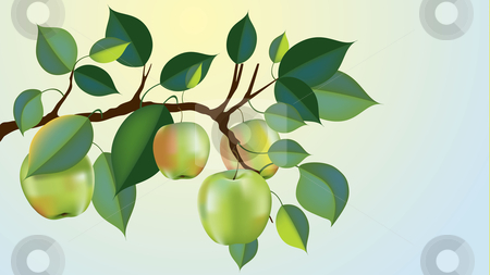 Beautiful granny smith apple branch vector stock vector clipart, Beautiful granny smith apple branch ready for harvest, gradient mesh used by Liviu Peicu