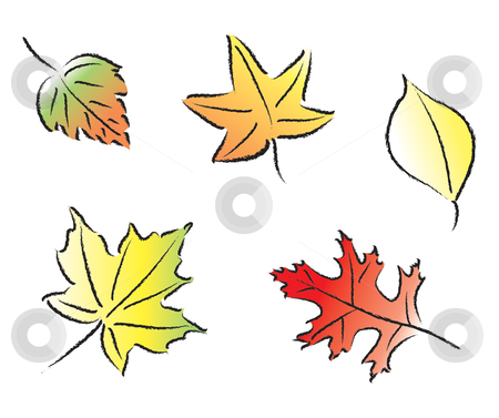 Assorted Fall Leaves stock vector clipart, Various common fall leaves in fall colors. by Jamie Slavy