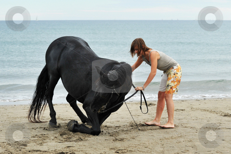 Girl and  horse on the beach stock photo, Kneeling black stallion on the beach with young woman by Bonzami Emmanuelle