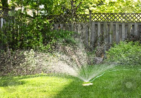 Lawn sprinkler watering grass stock photo, Watering backyard green grass lawn with sprinkler by Elena Elisseeva