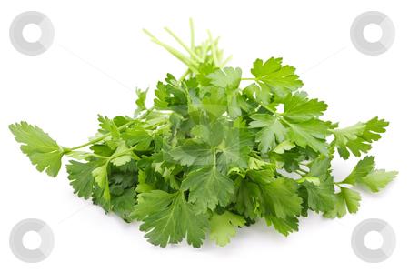 Fresh parsley on white background stock photo, Bunch of Fresh green parsley isolated on white background by Elena Elisseeva