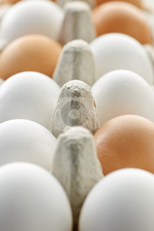 Eggs stock photo, Closeup of white and brown eggs in carton by Elena Elisseeva