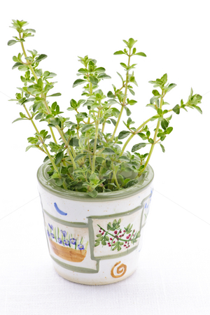Fresh thyme on white background stock photo, Fresh green thyme in a cup closeup on white background by Elena Elisseeva