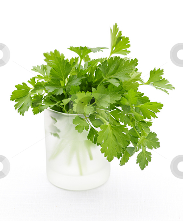 Fresh parsley on white background stock photo, Fresh green parsley in glass isolated on white background by Elena Elisseeva