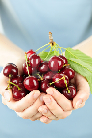 Hands holding bunch of cherries stock photo, Two hands holding bunch of fresh cherries by Elena Elisseeva