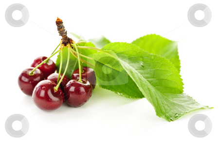 Fresh cherries stock photo, Bunch of fresh cherries with leaves on white background by Elena Elisseeva