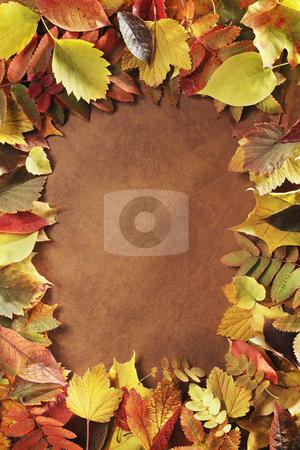 Autumn frame stock photo, Frame made of autumn leaves by Stocksnapper