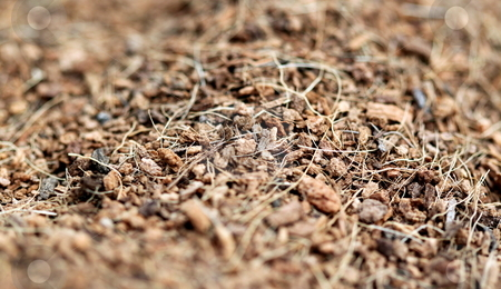Mulch stock photo, Close up of brown mulch good for use as a background by Henrik Lehnerer