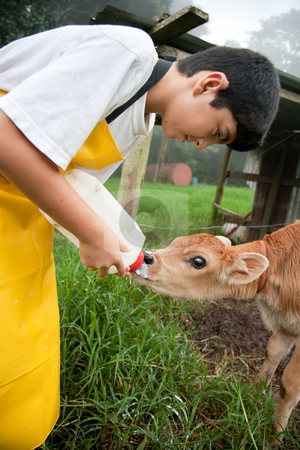 Young boy working on Costa Rican dairy farm stock photo, Young boy in apron working on Costa Rican dairy farm by Scott Griessel