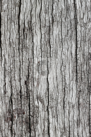 Old cracked weathered wood natural texture background. stock photo, Old cracked weathered wood natural texture background. by Stephen Rees