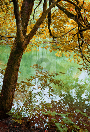 Autumn tree stock photo, Beautifu colorful autumn tree by the lake by GPimages