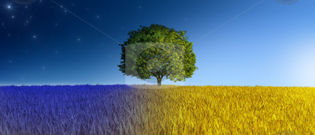 Night and day stock photo, Isolated tree in a grain field in day and night time by Giordano Aita