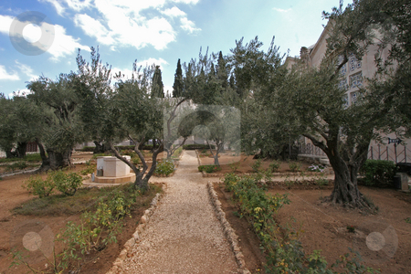 Jerusalem-Garden of Gethsemane stock photo - Download bible ...