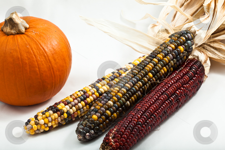 Pumpkin and Corn stock photo, Small pumpkin with multi colored indian corn isolated on white background overhead view with close crop by Joshua Minso