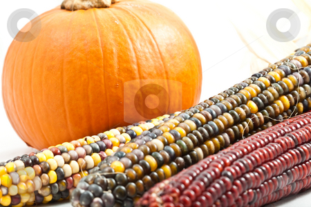 Pumpkin and Corn stock photo, Small pumpkin with multi colored indian corn isolated on white background close crop with the corn in the foreground slightly out of focus by Joshua Minso