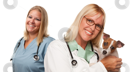 Female Veterinarian Doctors with Small Puppy stock photo, Attractive Female Veterinarian Doctors with Small Puppy Isolated on a White Background. by Andy Dean