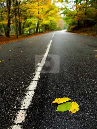 Leafs on the road stock photo, Beautiful road with some colored autumn leafs by ikostudio