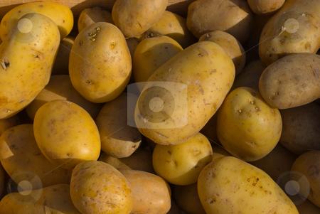 Kartoffeln (Solanum tuberosum) - Potatoes  stock photo, Die Kartoffel (Solanum tuberosum), in Teilen Deutschlands, in ?sterreich und der Schweiz auch als Erdapfel oder Grundbirne ( by Wolfgang Heidasch