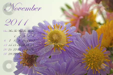 November 2011 stock photo, Page of 2011 calendar for November, with purple daisy by Fabio Alcini