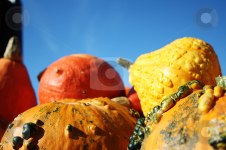 Large healthy pumpkins stock photo, Pretty different types of pumpkins for sale by Viktor Thaut