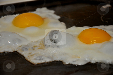 Fried Eggs stock photo, Eggs Grilling by Richard Sheehan
